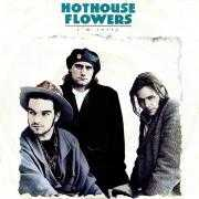 Coverafbeelding Hothouse Flowers - I'm Sorry