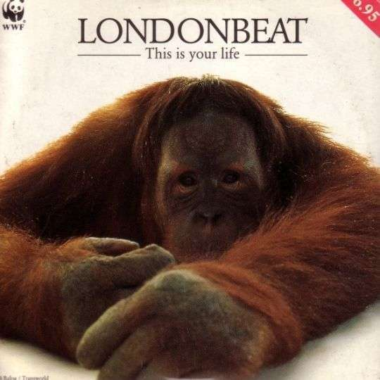 Coverafbeelding Londonbeat - This Is Your Life