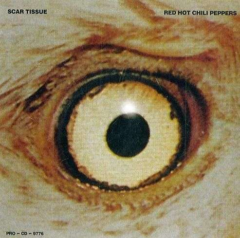 Coverafbeelding Scar Tissue - Red Hot Chili Peppers
