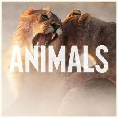 Coverafbeelding Maroon 5 - Animals